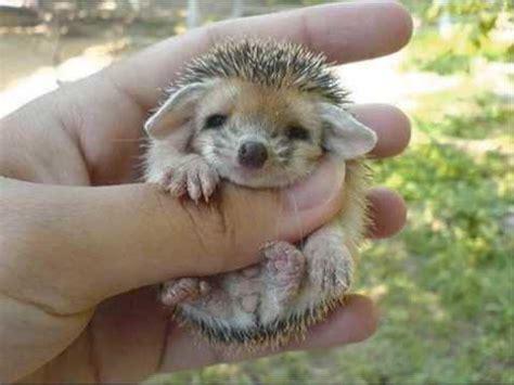 cute baby hedgehog!!! youtube