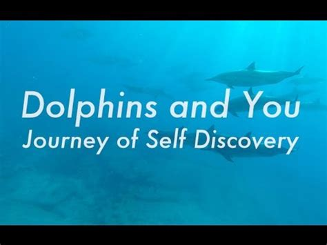 lost in a the journey to self discovery books dolphins and you journey of self discovery ドルフィン ユー