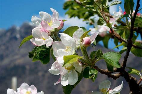 fotografie di fiori primavera prato in fiore gt sguardo al cielo