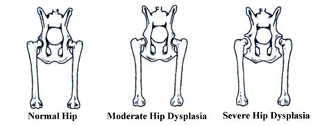 signs of hip dysplasia in dogs hip dysplasia in dogs classification causes signs symptoms diagnosis treatment