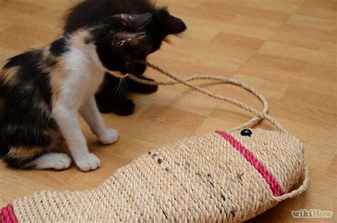 how to stop a cat from scratching the couch how to stop a cat from clawing furniture