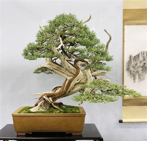 winners part 2 bonsai bark