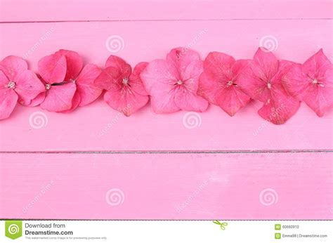 pink flower floor l row of hydrangea flowers stock photo image of flower