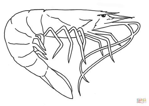 shrimp color shrimp coloring page free printable coloring pages