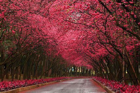 immagini da sogno paesaggi da sogno le incredibili bellezze della natura