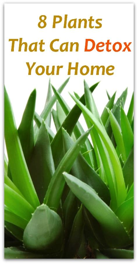 Detox Your House by 8 Plants That Can Detox Your Home Holistic