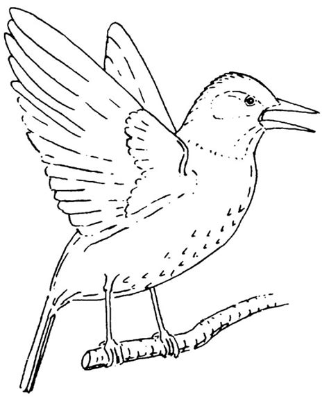 winter bird feeder coloring pages