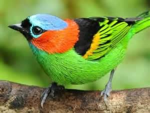 animali da gabbia uccelli colorati