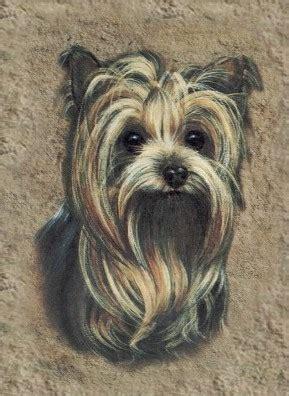 yorkie sick symptoms terriers akc ocala florida