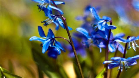flower spring spring flowers wallpapers hd pictures one hd wallpaper