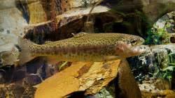 licenza di pesca nelle acque interne tipo b fiume tirino bussi sul tirino pesca abruzzo