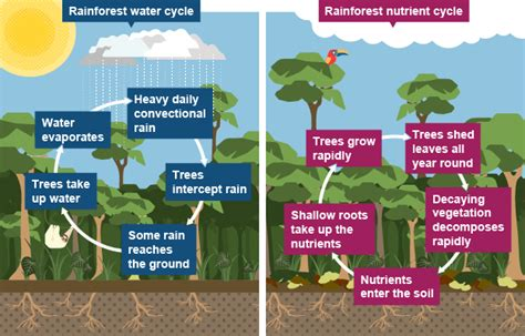 when a tropical forest is cleared why does the soil
