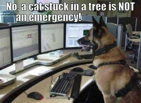 Ambulance In German Meme - 120 best images about german shepherd memes on pinterest