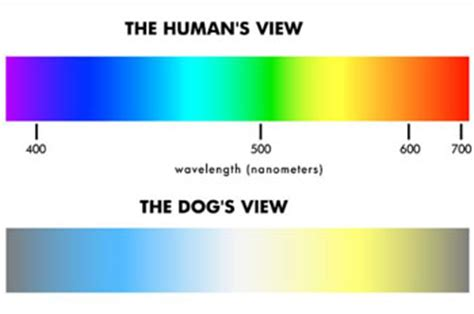 dogs color vision vision colourchat