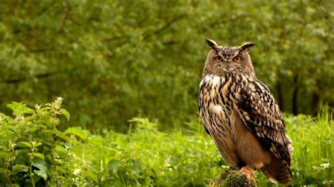 owl background owl wallpapers images photos pictures backgrounds