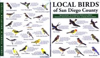 Most Common Backyard Birds - san diego county local birds
