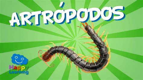 imagenes animales artropodos los artr 243 podos videos educativos para ni 241 os youtube