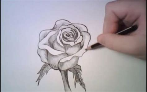 come si disegnano i fiori come disegnare una rosa con una semplice matita disegnare
