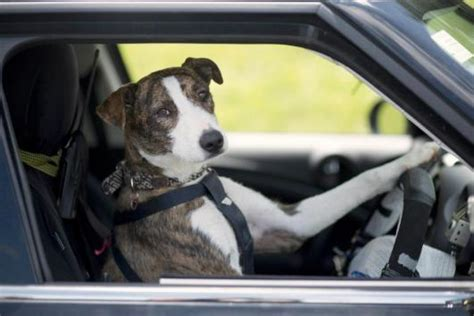 dog driving boat video introduction to the new order of st agatha by db guest