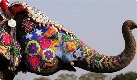 elephant color paint indian elephant indian design flowers wallpapers images pictures