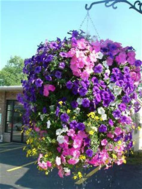 What Did Most Rich Southern Planters Do With Their Wealth by 1000 Images About Hanging Flower Baskets On
