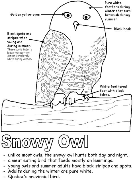 printable owl worksheets preschool worksheets of owls preschool best free