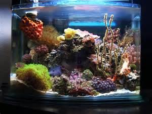 Saltwater Aquarium Aquascape Even The Tiniest Aquariums Can Make Spectacular Reefs