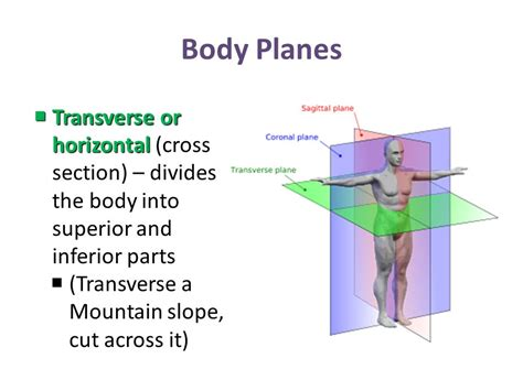a section that divides the body into left and right anatomy a chapter 1 week ppt video online download