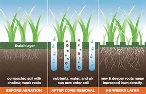 show your lawn some love the importance of aeration