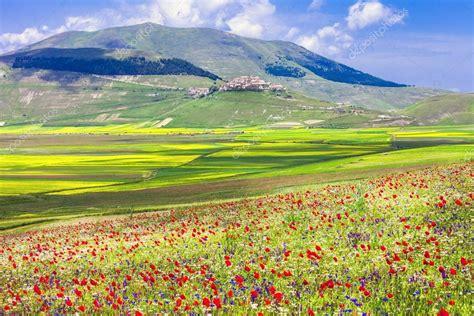 immagini di prati fioriti prati fioriti a castelluccio di norcia umbria italia