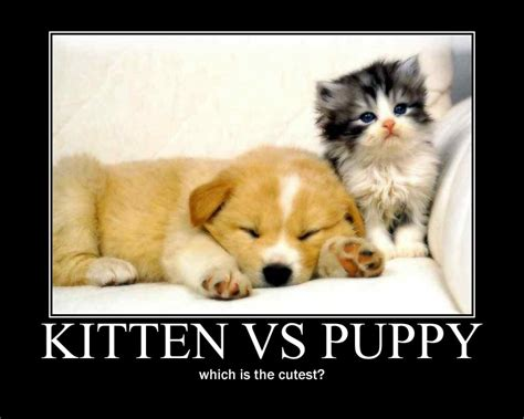 puppy vs kitten kitten vs puppy by anju7 on deviantart