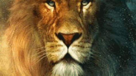 imagenes de leones rojos animales gif find share on giphy
