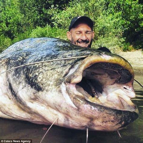 Ikan Lele Sale Ikan Lele Salai fisherman reels in 19 catfish after an hour
