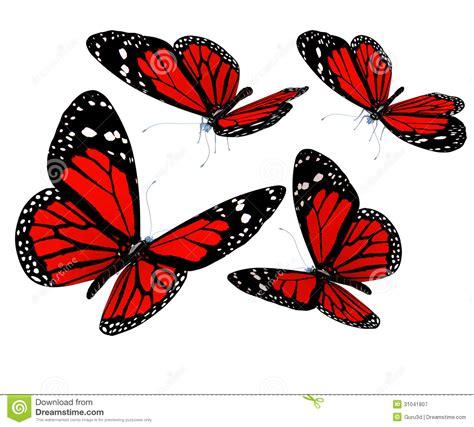 imagenes mariposas rojas image gallery mariposas rojas