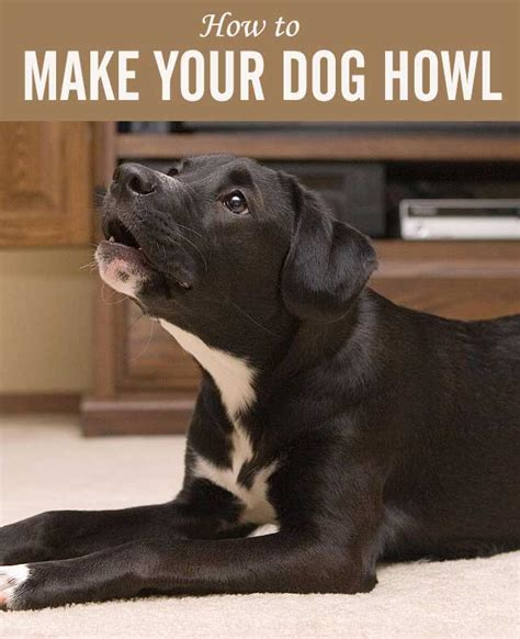 how to make your puppy you how to make your howl chasing tales
