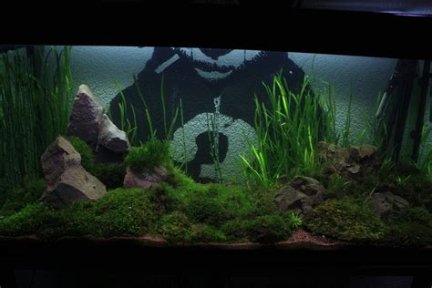small aquarium aquascape 350 liter aquarium moss aquascape by vodoc on deviantart