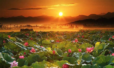 lotus dental education lotus flower