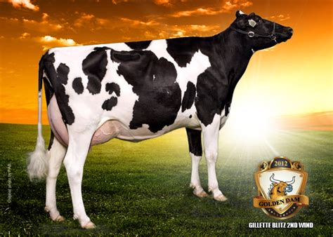 Topi Elleven Cow lylehaven lila z the bullvine the dairy information