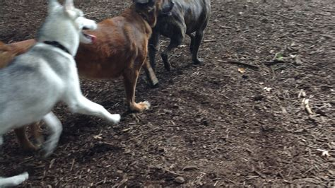 how to build a dog park in your backyard petition 183 build a dog park in stanwood park 183 change org