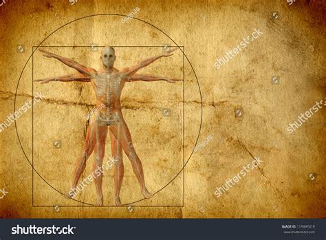 quadrilaterals in the human body newhairstylesformen2014 com human body circle concept conceptual vitruvian human body