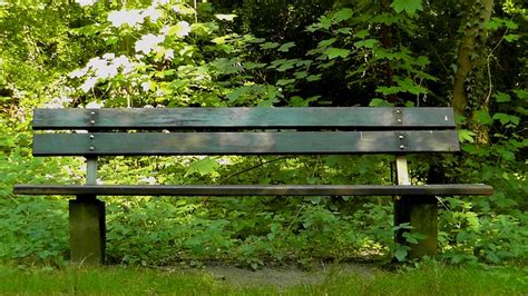 park bank bank sit park bench rest summer forest recovery