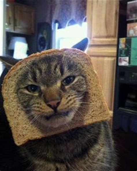 Cat Toast Meme - more toast yes i am a crazy cat lady sometimes