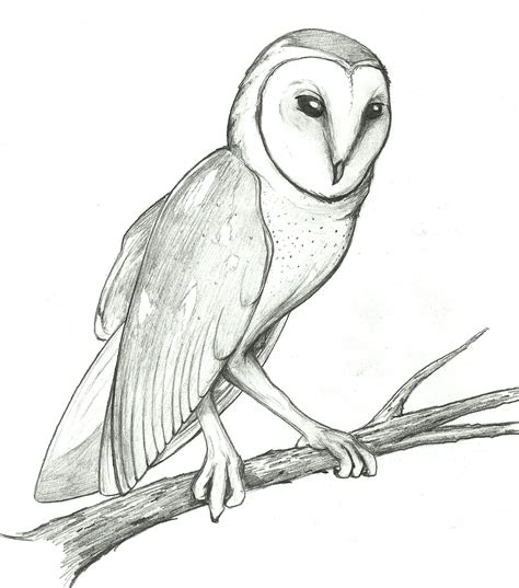 top 86 barn owl clipart free clipart image
