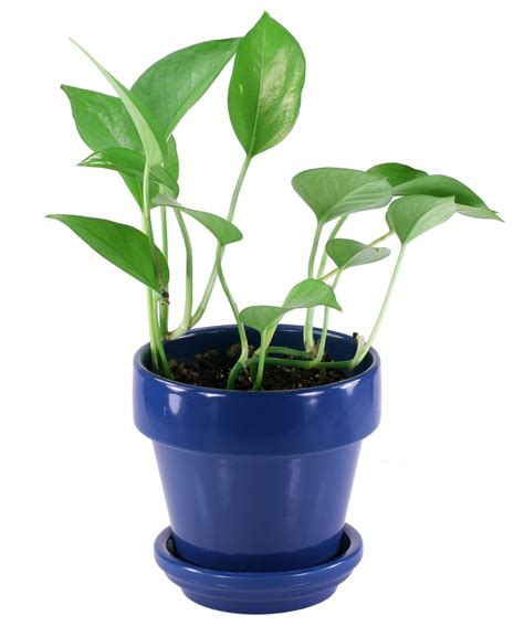 good house plants the benefits of container gardening