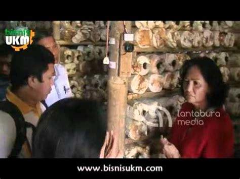 Bibit Jamur Tiram Di Indramayu budidaya jamur merang doovi