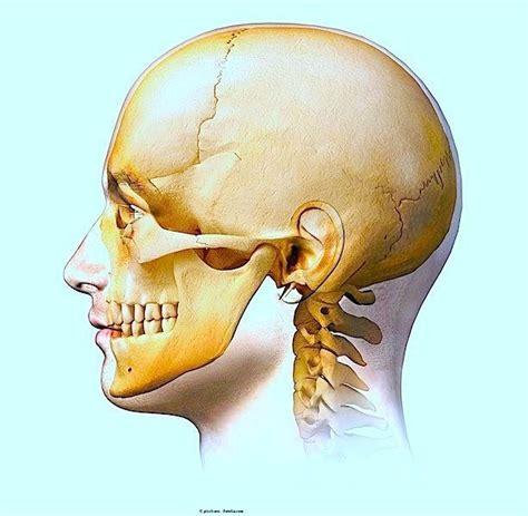 dolore interno fianco sinistro dolore alla mandibola destra o sinistra