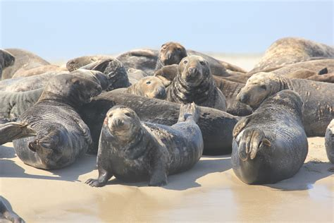 Cruise Seal The Deal With A 3 Minute seal cruise monomoy island excursion