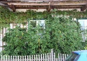 winterharte blumen für den garten chestha dekor pflanzen balkon