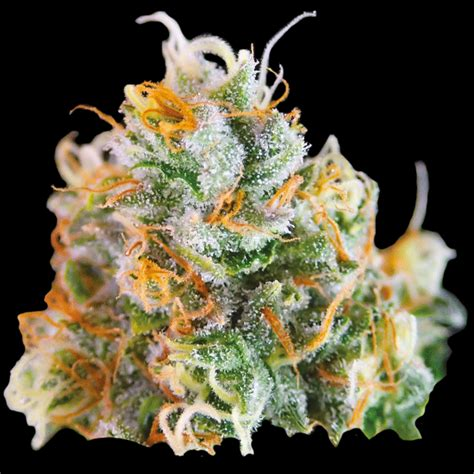 White Widow   Chalice Farms