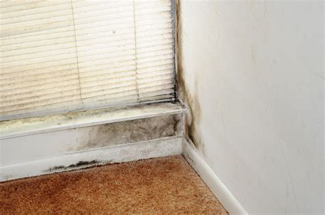 Symptoms Of Mold In House by Mold Illness Is Everywhere What It Is And 11 Signs You